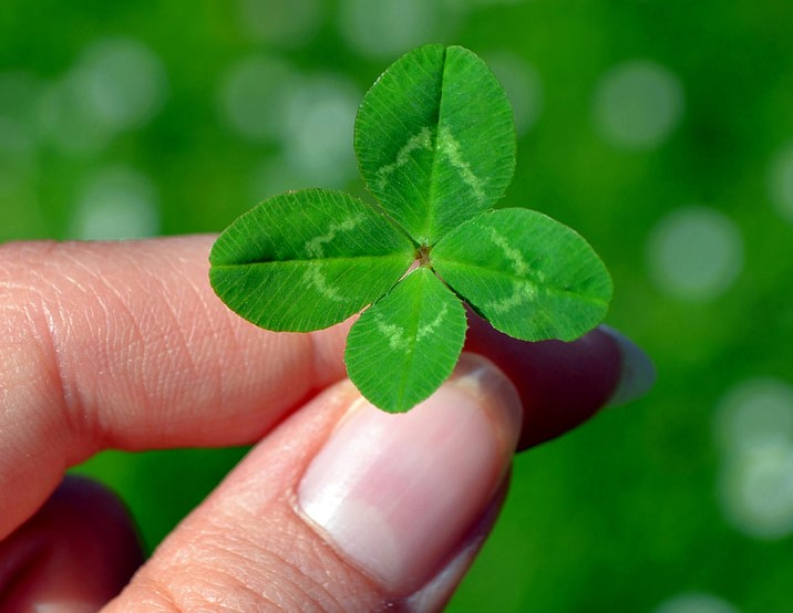 5 Fun Facts About the Four-Leafed Clover