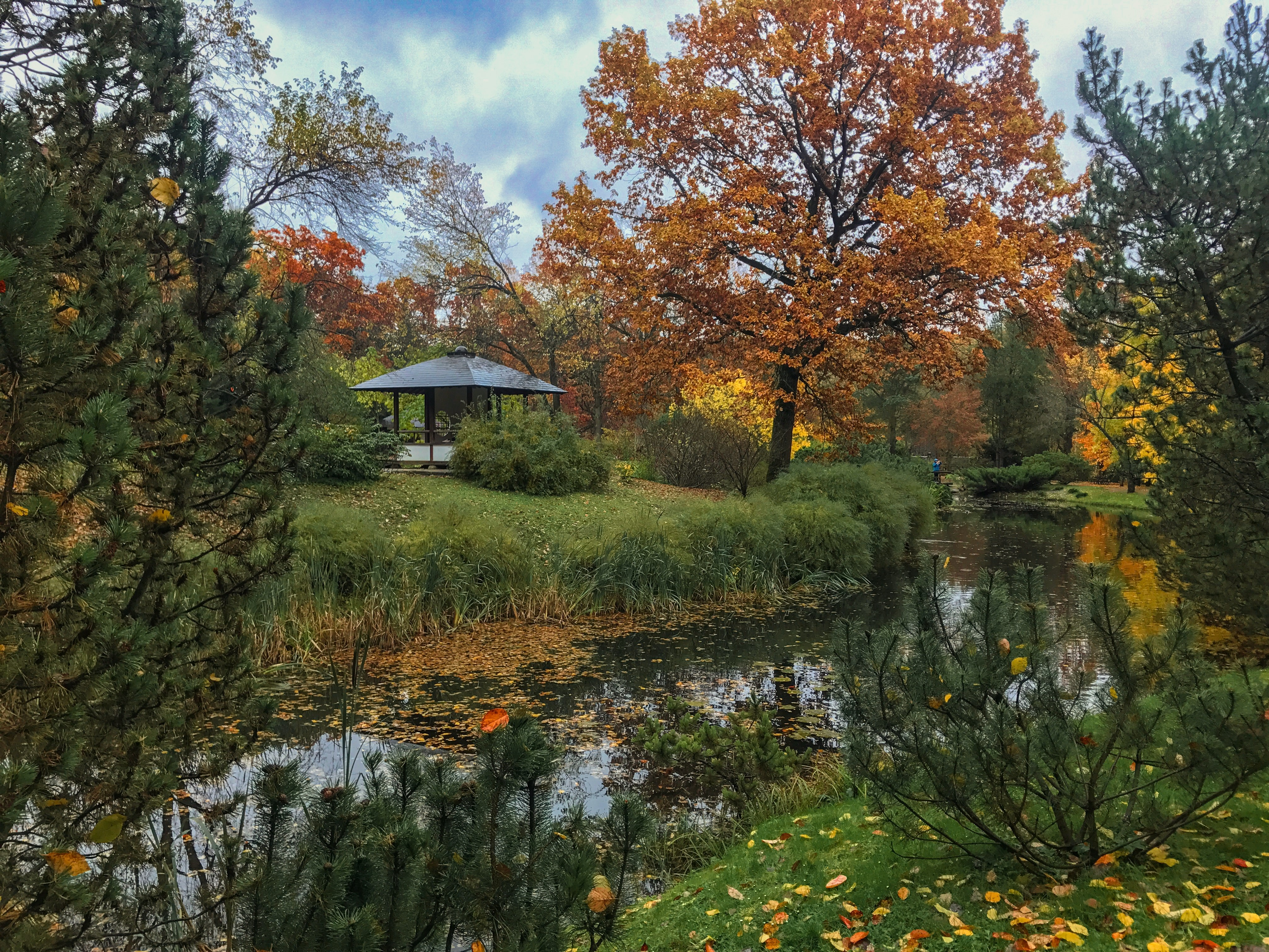 Berkeley Botanical Garden