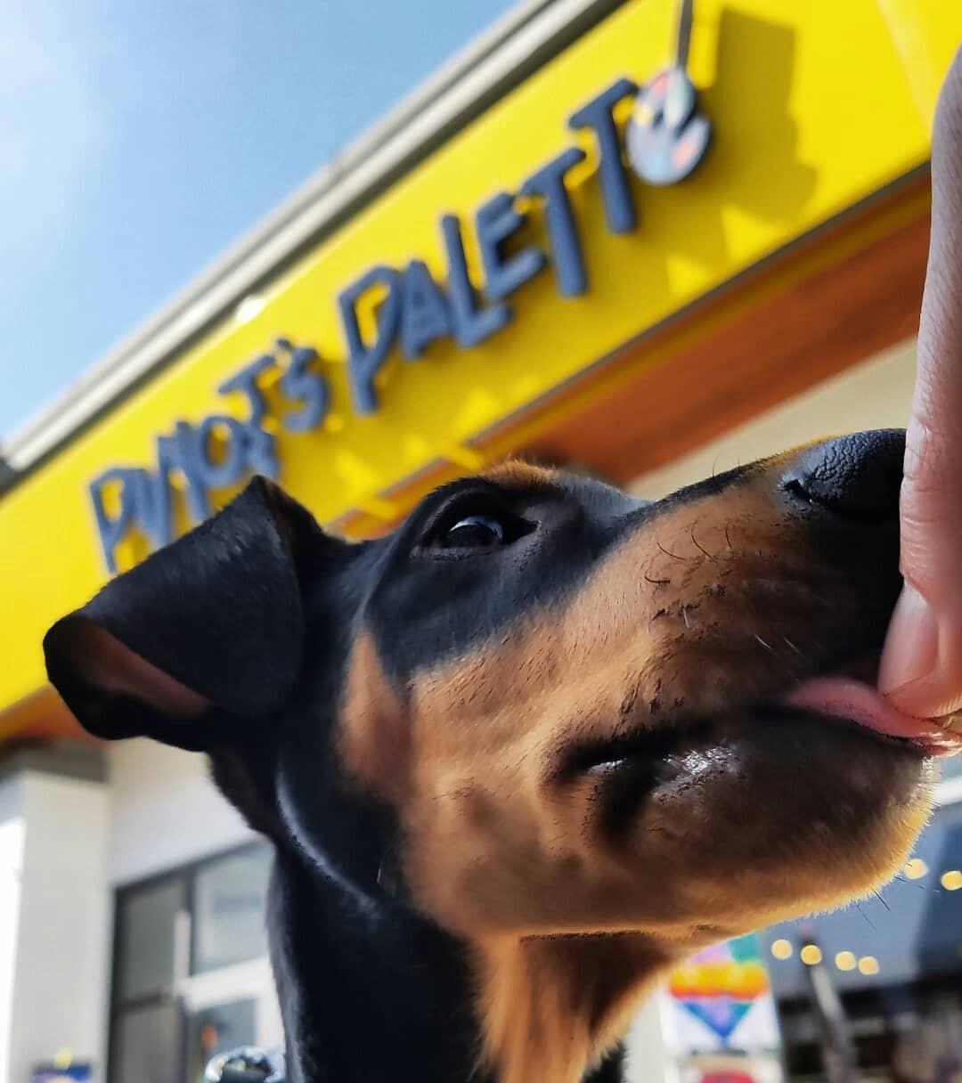 Pinot Pup