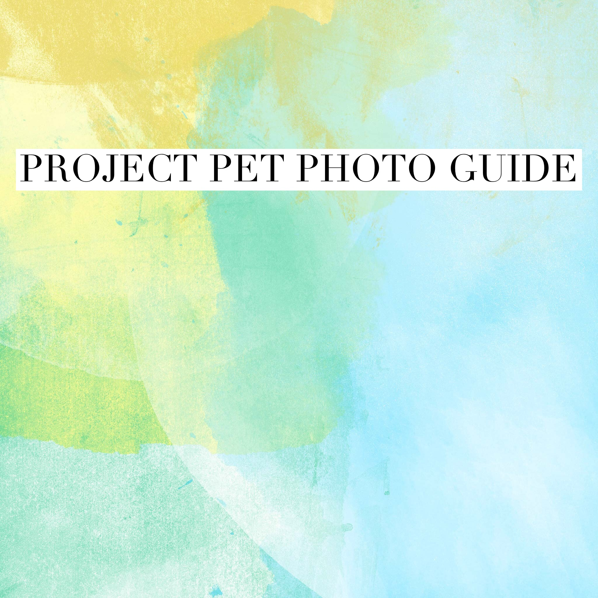 Project Pet at Pinot's Palette