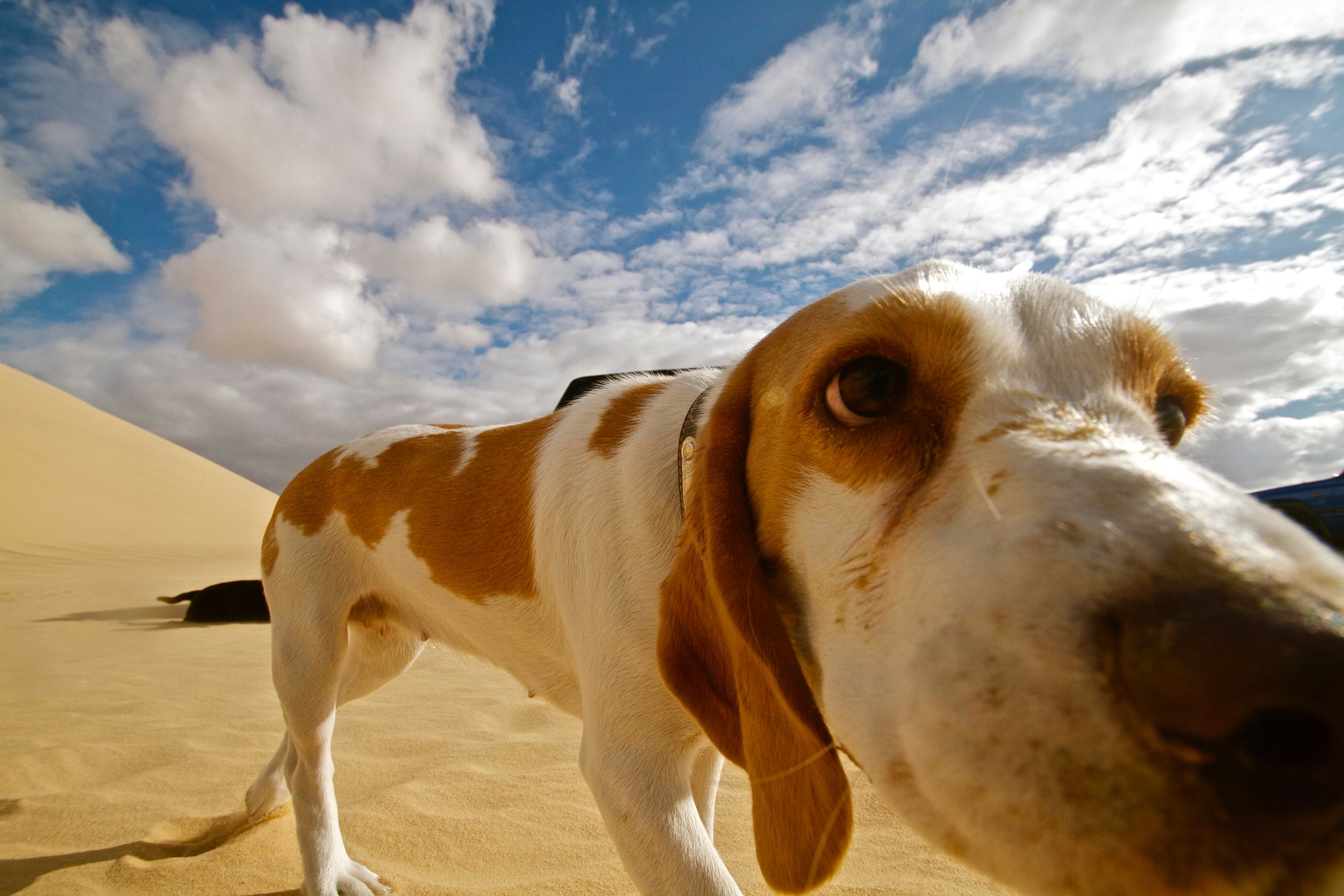 Best Dog-Friendly Getaways and Planning Tips