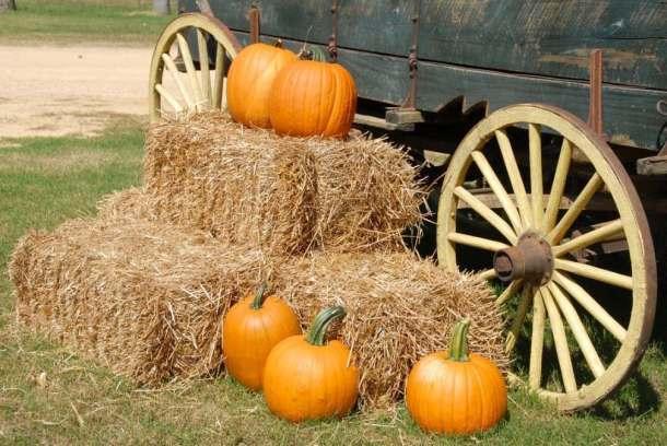 Fall-ing for Kansas City!