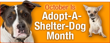 October is Adopt a Shelter Dog Month - Pinot's Palette